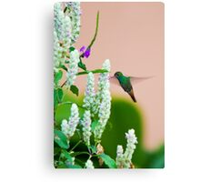 Hummingbird (vertical) In Costa Rica Canvas Print
