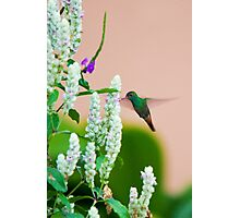 Hummingbird (vertical) In Costa Rica Photographic Print