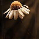 demure by Purplecactus