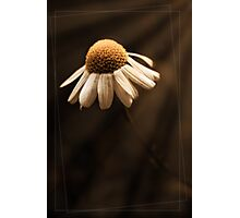 demure Photographic Print