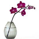 violet orchid in vase by OldaSimek