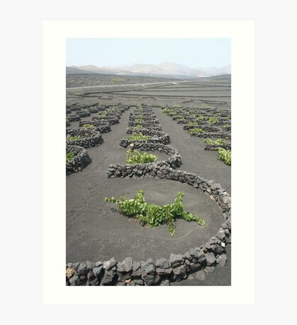 Lanzarote Vineyard Art Print