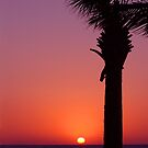 Sunset Palm by Susanne Van Hulst