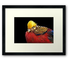 Multi Colored Bird Framed Print