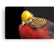 Multi Colored Bird Metal Print