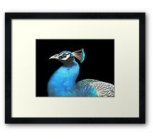 Indian Peacock Framed Print