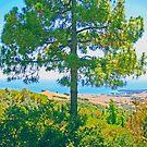 Coastal Pine photo painting by randycdesign