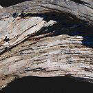 Driftwood Arch photo painting by randycdesign