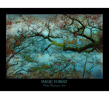 Magic Forest Photographic Print