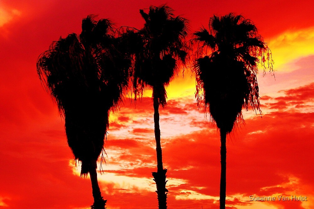 Three Palms by Susanne Van Hulst