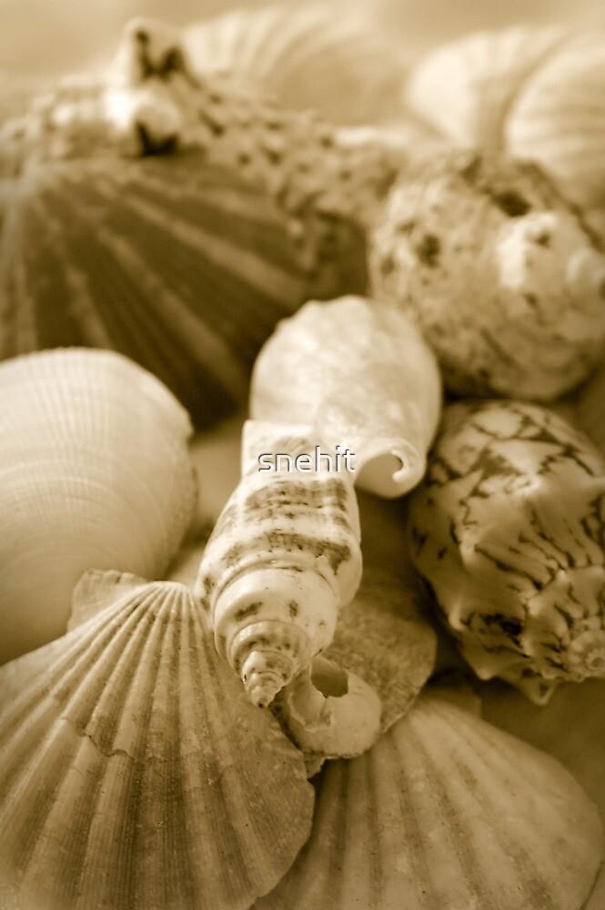 Shells by snehit