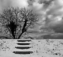 Lonely Winter Tree by energyman242