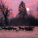 Moonlight Horses by pahit