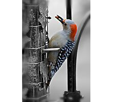 Golden-fronted Woodpecker Photographic Print