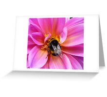 Bumble Bee on a Dahlia Greeting Card