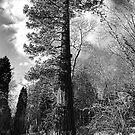 Tall Tall Tall Tree by Noel Taylor