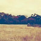 Yellow Field by JenniferElysse