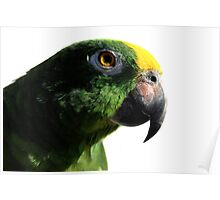 Parrot (Papagaio Brasileiro) Poster