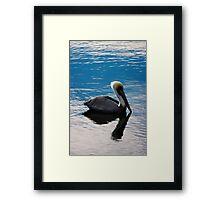 Pelican In Blue Sunset Framed Print