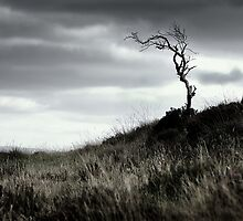 A bare tree at Tamnyrankin - Co. Londonderry by Andrew Gilmore
