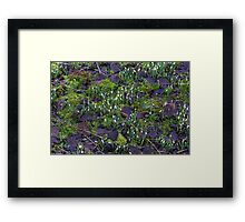 The first Snowdrops Framed Print