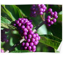Beautyberry Poster