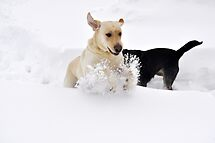 I Love Snow!!! I Love Snow!!! I Love Snow!!! by Corkle