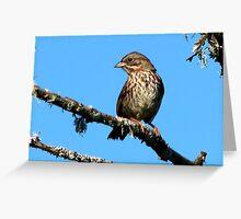 Song Sparrow ~~ Melospiza melodia Greeting Card