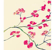 Pink red cherry blossoms painting Photographic Print