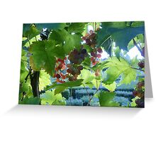 French Grapes Greeting Card