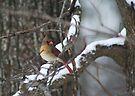 Enjoying the Snow by Bonnie Robert