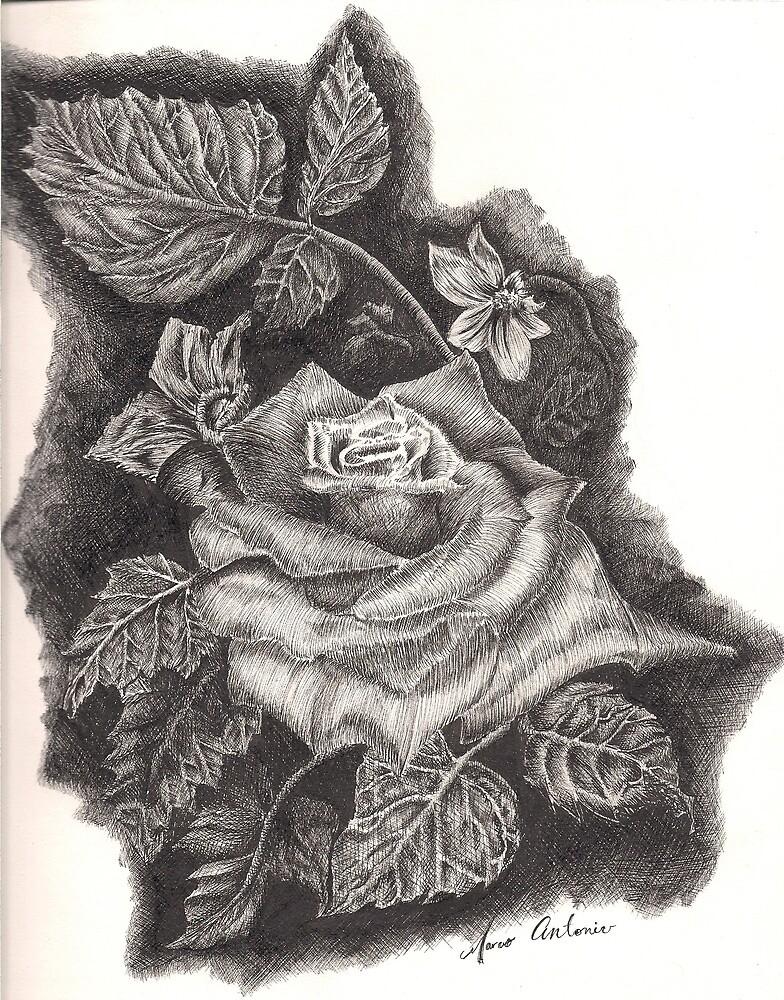 rose by marcoantonio
