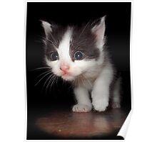 Willy's Kitty (Pub Kitten) Poster