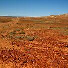 Red Gibber Plain,Oodnadatta Track by Joe Mortelliti