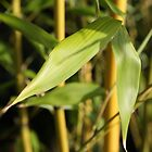 bamboo leaves by TerrillWelch