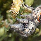 Jumping spider that took a look. by Michael  Gunterman