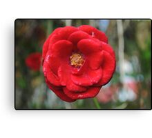 One more rose Canvas Print