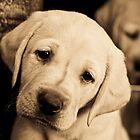 Puppy Love by Nancy Stafford