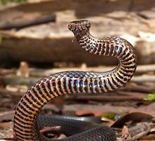 Golden Crowned Snake by peterstreet