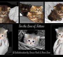 For the love of Kittens by Teresamarie