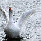 White geese  by DutchLumix