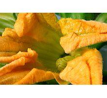 Zucchini Spring Photographic Print