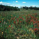 Mountain Meadow in August by nealbarnett