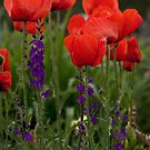 Summer Poppies by AudraJS