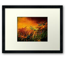 Dragonfly...Towards The Light  Framed Print