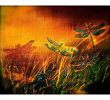 Dragonfly...Towards The Light 2 Photographic Print