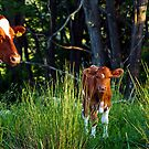 Mother and Calf by BigD