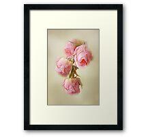 Pink Lace Roses Framed Print