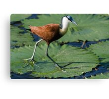 Hunting for Breakfast Canvas Print