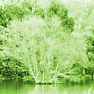 Pond Trees photo painting by randycdesign